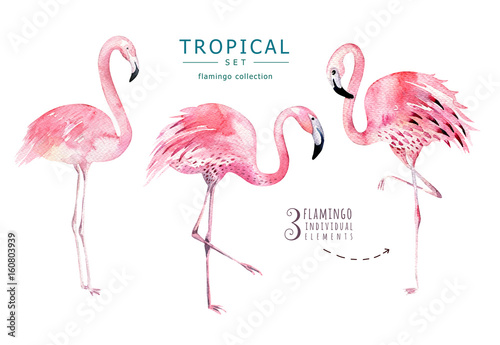 Canvas Prints Flamingo Bird Hand drawn watercolor tropical birds set of flamingo. Exotic bird illustrations, jungle tree, brazil trendy art. Perfect for fabric design. Aloha set