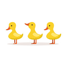 Three Cute Cartoon Ducklings Characters Standing One After Another Vector Illustration