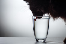Cat Drinks Water From Glass