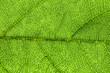 canvas print picture -  green leaf, macro, zoom blur
