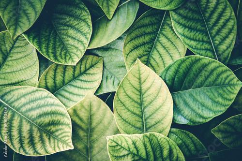 swieza-tropikalna-zielen-opuszcza-tlo-retro-rocznik-colortone