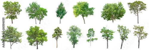 collection of tree on white background. (for gardening)