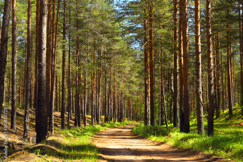 Photo Stands Road in forest Pine forest.Forest road.