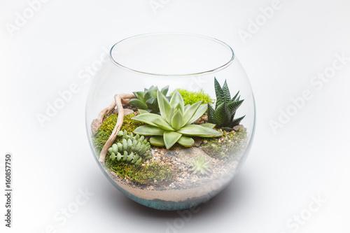 Succulent Arrangement In A Glass Vase Terrarium Buy This Stock