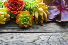 Close Up Cute Colorful Succule...