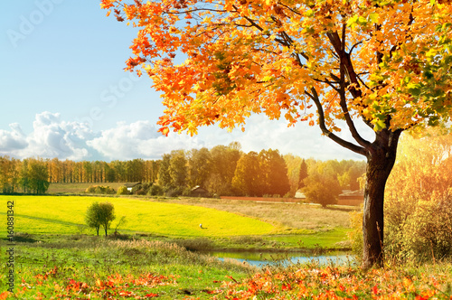 Photo Stands Yellow Autumn landscape