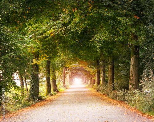 Fotografering  alte Straße mit Bäumen, Allee