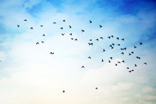 Flying Birds In Cloudy Sky