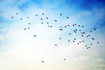 FototapetaFlying birds in cloudy Sky