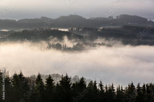 Poster Morning with fog Nebel über einem Wald