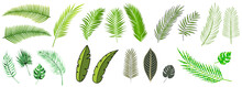 Palm Leaves Compilation In Man...
