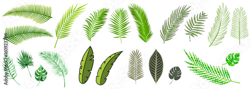 Obraz palm leaves compilation in many different styles - fototapety do salonu