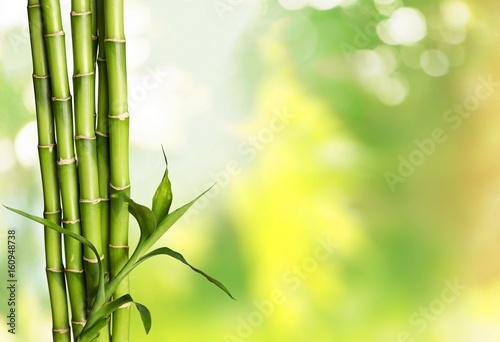 Fotografía  Bamboo shoot.