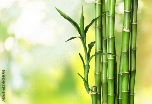 Foto op Canvas Bamboo Bamboo shoot.