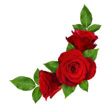 Red Rose Flowers In Corner Arr...