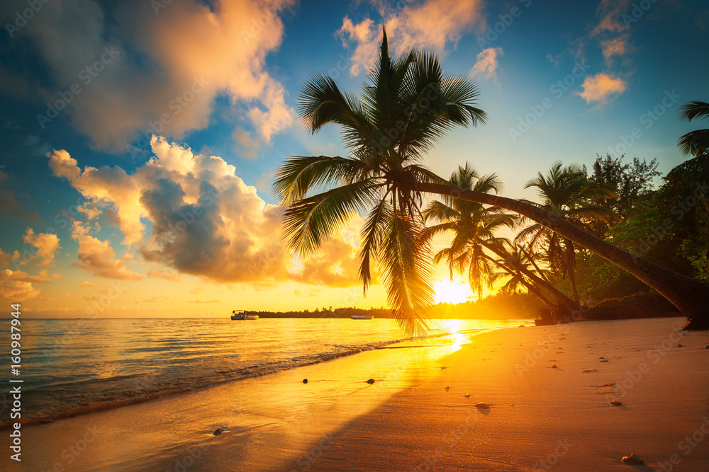 Fototapety, obrazy: Palm and tropical beach in Punta Cana, Dominican Republic