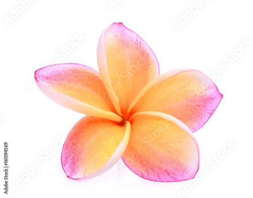 Foto op Canvas Frangipani orange frangipani or plumeria (tropical flowers) isolated on white background