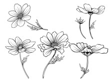 Cosmos Flowers. Set Of Outline Flowers.