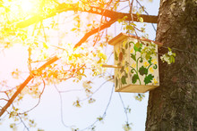 Painted Birdhouse Hanging On A Tree