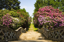 Stairs In Hever Gardens
