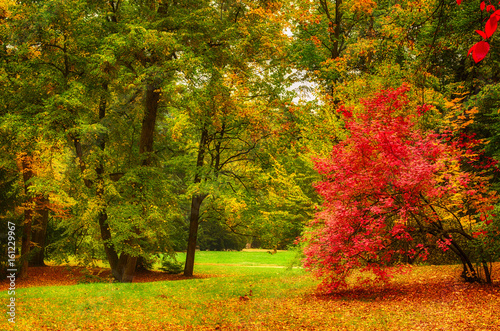 Fotografie, Obraz  Autumn park with fall trees and meadow , natural seasonal background