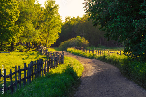 Gris traffic Rural Sweden summer landscape with road, green trees and wooden fence. Adventure scandinavian hipster eco concept