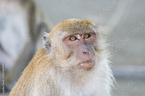 In de dag Macaque monkey in wildlife Thailand.