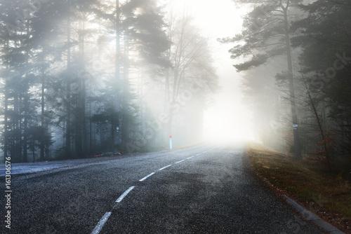 asfaltowa-droga-prowadzaca-przez-mglisty-ciemny-tajemniczy-las-sosnowy-alzacja-francuska