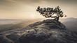 Leinwanddruck Bild - Sächsische Schweiz - Alte Kiefer zum Sonnenaufgang