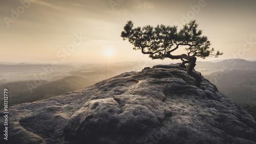 Beige Sächsische Schweiz - Alte Kiefer zum Sonnenaufgang