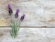 Spanish Lavender Flowers On A ...