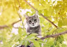 Cute Funny Tabby Kitten Climbe...