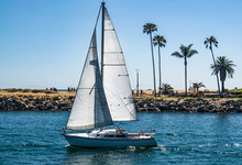 Sailboats In Harbor Off Balboa Island, Newport Beach California