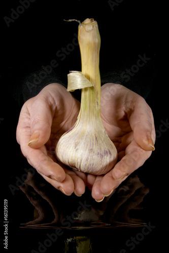 Head of garlic in hands Wallpaper Mural