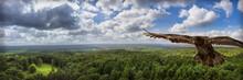 Eagle Flying Over Green Forest