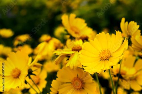 Fotografering  Yellow flower in a green garden