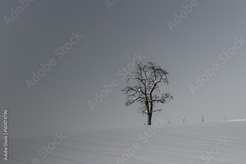 Fototapety, obrazy: lonesome tree and fenceposts in winter landscape with snow in black and white