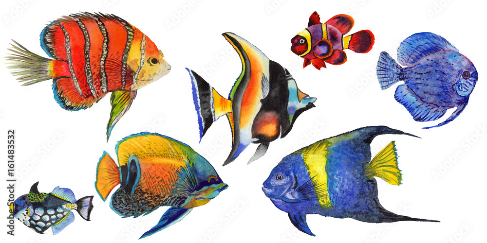 Fototapeta Watercolor aquatic underwater colorful tropical fish set. Red sea and exotic fishes inside.