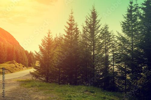 Tuinposter Zwavel geel Mountain landscape, fir trees against sunset sky
