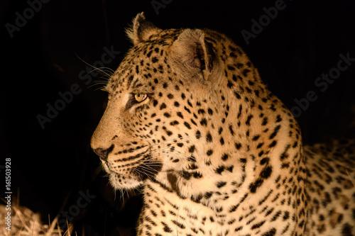 Obrazy na płótnie Canvas Animals in Djuma Sabi Sands South Africa