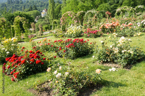 Papiers peints Jardin rosengarten