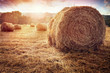 canvas print picture - Hay bales harvesting in golden field at sunset