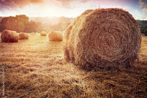 Valokuva Hay bales harvesting in golden field at sunset