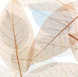 Przejrzysta tło tekstura kolorowi Susi kwieciści liście - 161532741