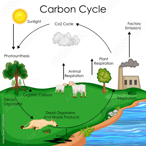 Education Chart Of Biology For Carbon Cycle Diagram