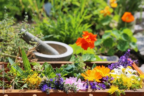 Fototapeta Heilpflanzen aus dem Garten obraz