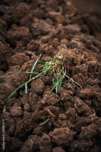 Fotografie, Obraz  Radici nel terreno