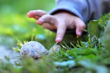 Child's Finger Pointing On The Snail. Image With Selective Focus