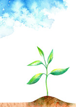 Sprout In The Ground And Sky.Spring Picture.Watercolor Hand Drawn Illustration.White Background.