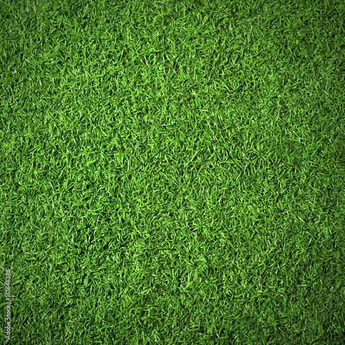 Foto op Plexiglas Weide, Moeras Nature background of green textured grass for abstraction